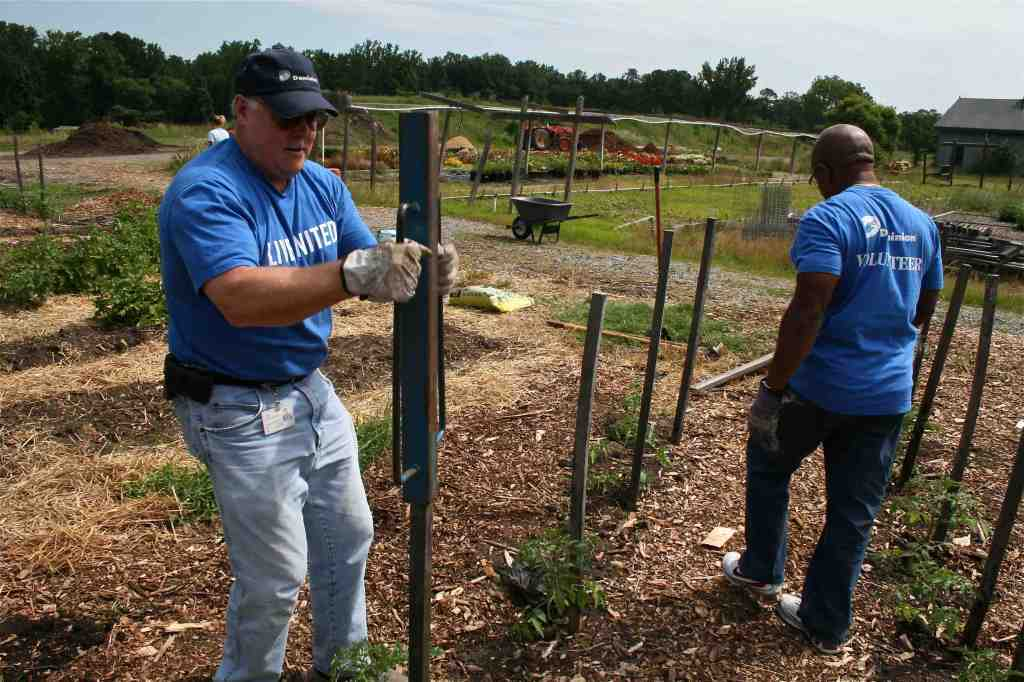 Rod Holmes (left) and Mike Wright tackle the tough task of driving tomato stakes.
