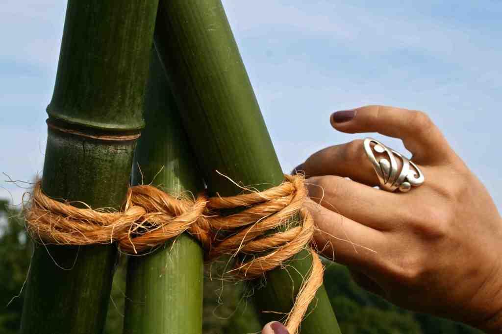 Sugar Baby bamboo Trellis