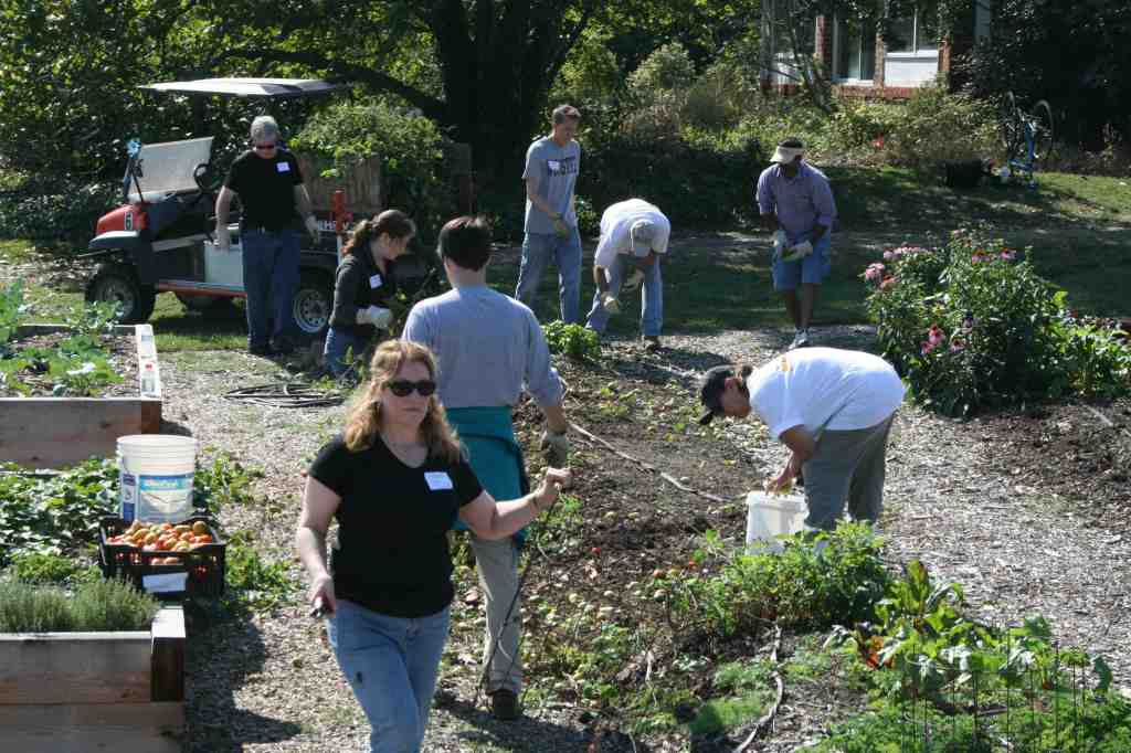 community kitchen garden volunteers