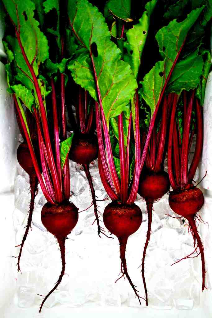 Beet bonanza. These beets were grown from seed obtained from the Thomas Jefferson Center for Historic Plants. Early Blood Turnip Root (Betas vulgaris, family Amaranthaceae).