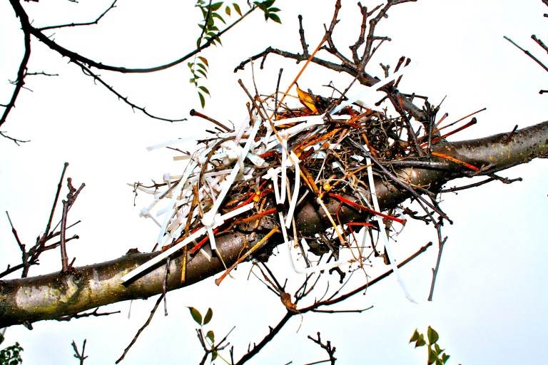 Actual bird's nest constructed from discarded zip ties, Brown's Island, Richmond, VA.