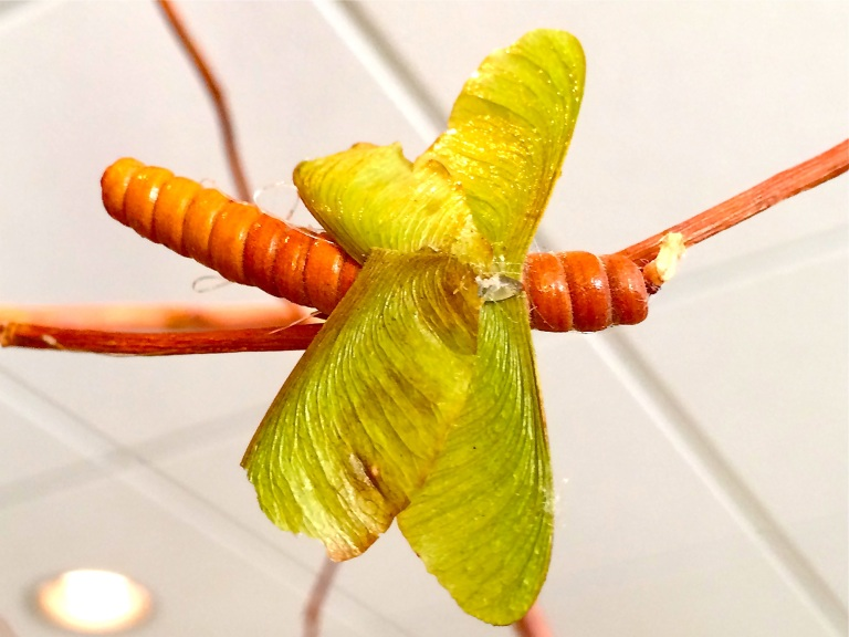 A dragonfly with maple seed pod wings. Design & construction by Lesley Madigan.