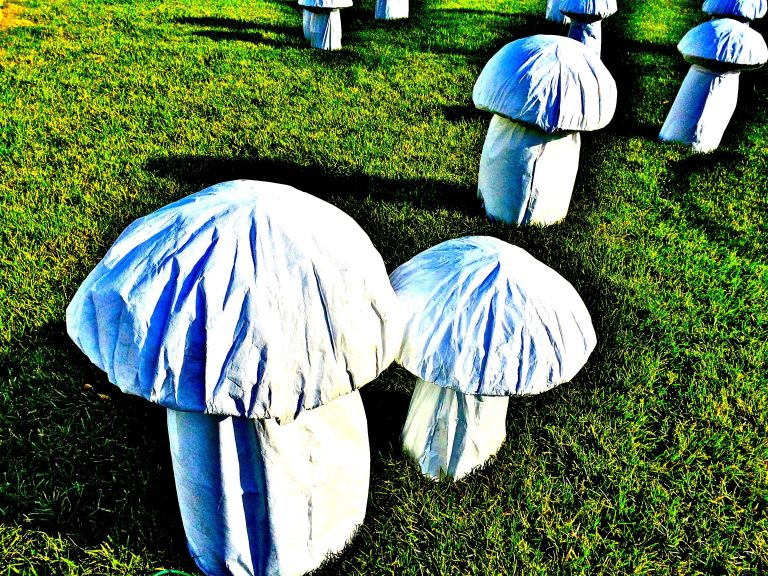 Super-sized mushrooms populate the lawn in front of the Conservatory.