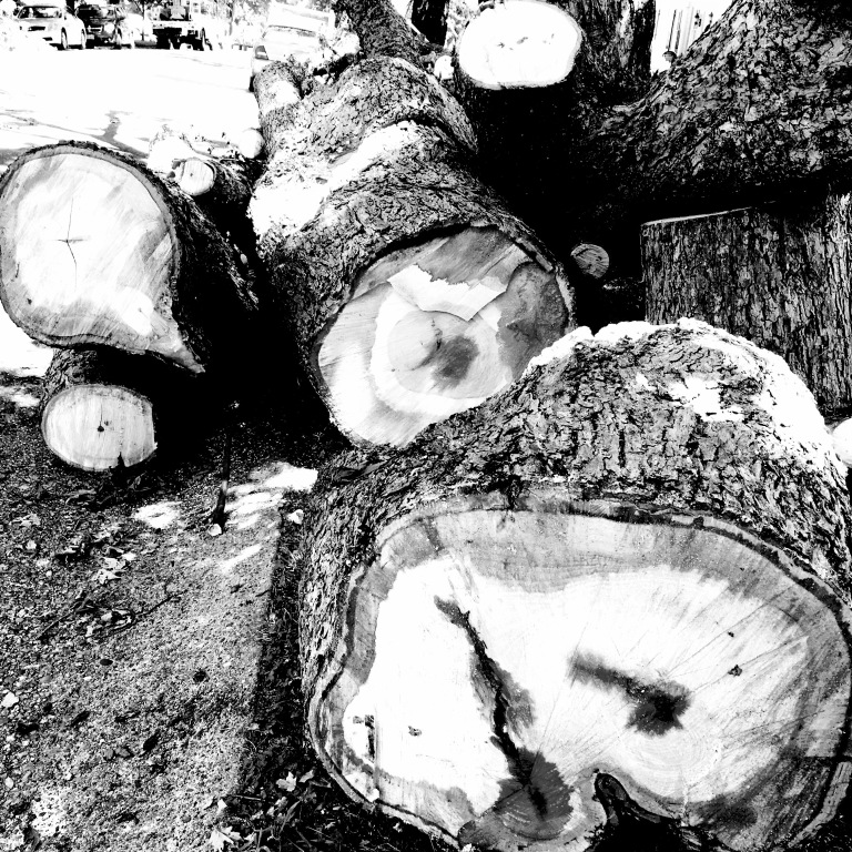 Massive hardwoods that can bring so much joy to humans can also turn deadly.