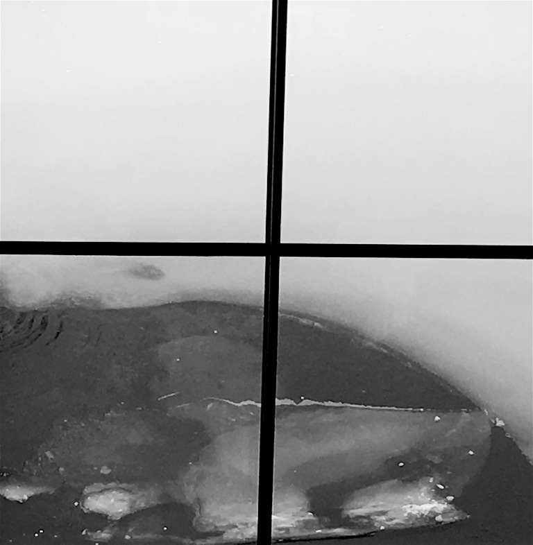 Look out for the iceberg... VMFA Anne Cobb Gottwald reflecting pool in January.